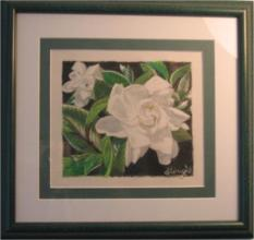 Gardenia in colored pencil